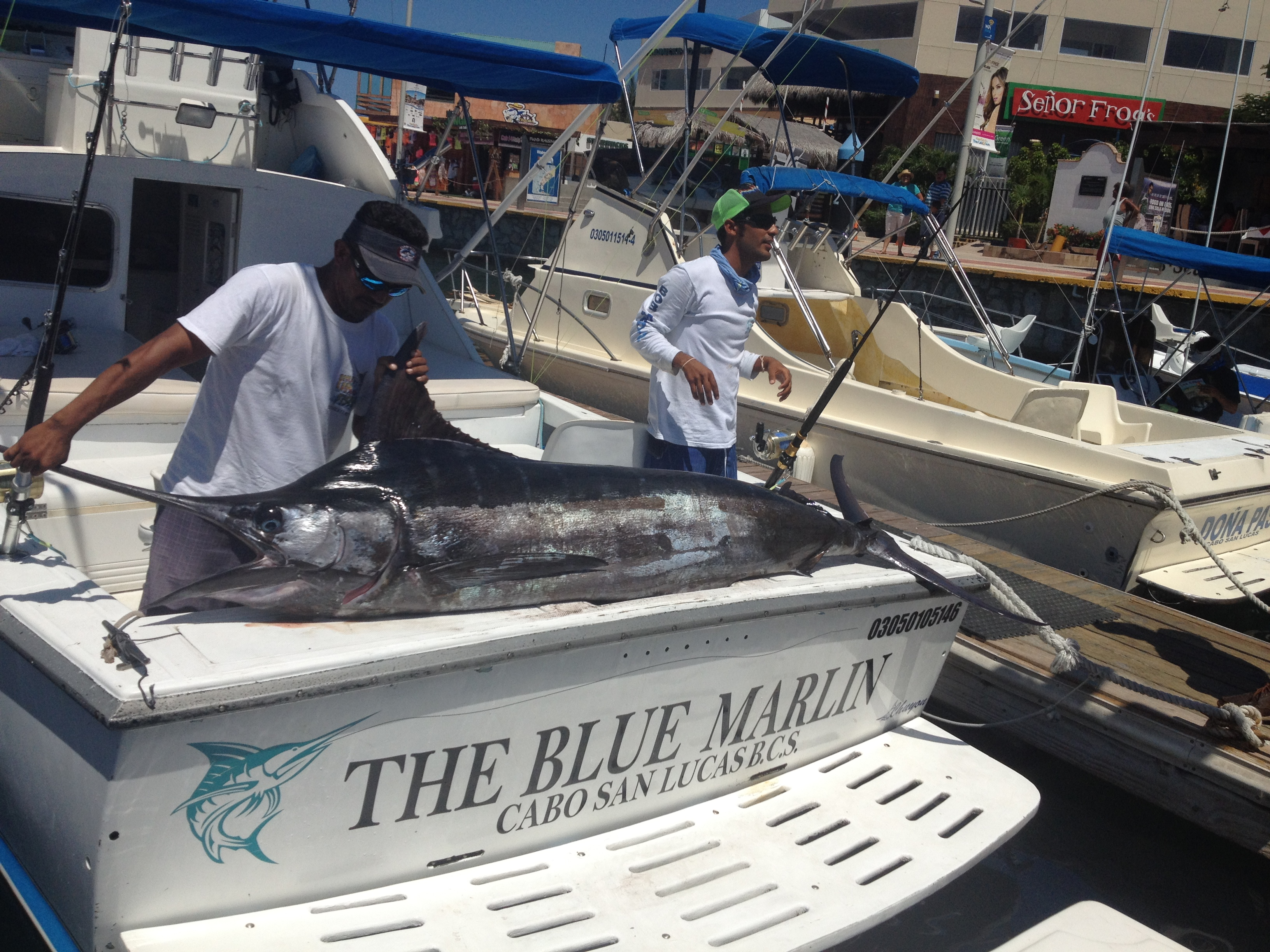 The-Blue-Marlin-I-1.CSL1
